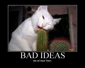 bad-idea-cat-cactus
